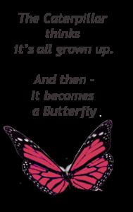 butterflytransny